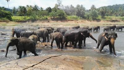 Poznanie juhozápadu Srí Lanky za 5 nocí