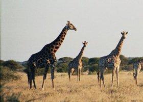 botswana-hotel-nxai-pan-020.jpg